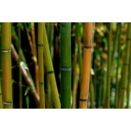 cabine de plage tissu en viscose de bambou